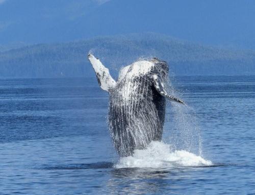 Le ventre de la Baleine